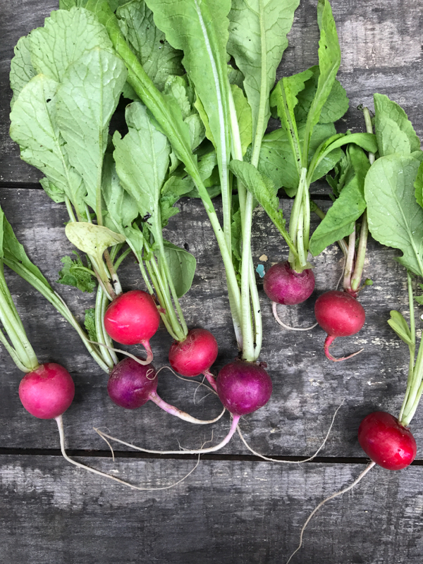 Radishes on eatlivetravelwrite.com