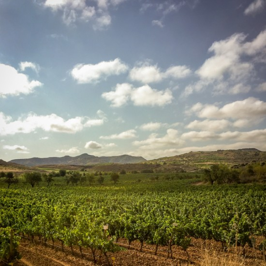 Rioja scenes on Camino de Santiago on eatlivetravelwrite.com