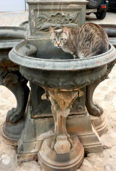 Cat drinking at pilgrim fountain on the Camino de Santiago from Navarrete to Najera on eatlivetravelwrite.com