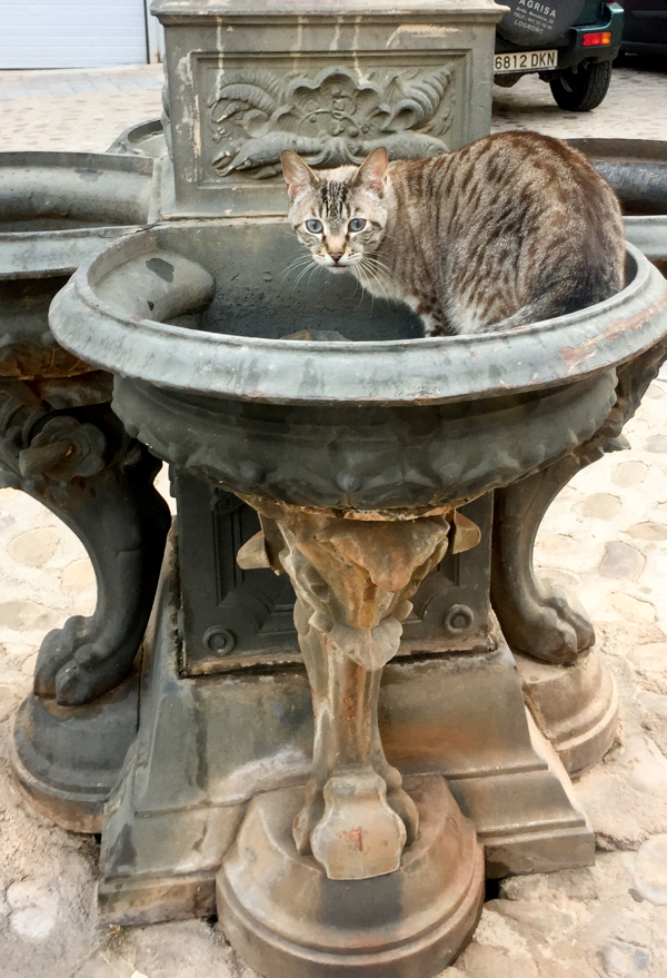 Cat drinking at pilgrim fountain on the Camino de Santiago from Navarrete to Najera on eatlivetravelwrite.com