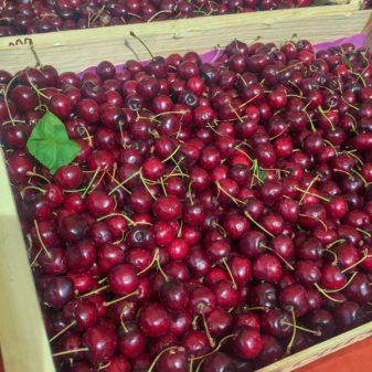 Cherries in Vic Fezensac on eatlivetravelwrite.com