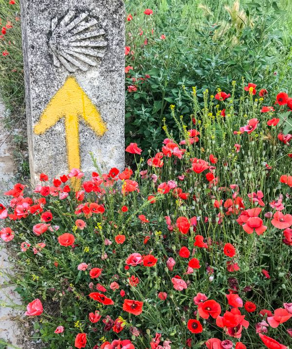 Camino signs and red flowers walking from Carrión de los Condes to Calzadilla de la Cueza on eatlivetravelwrite.com