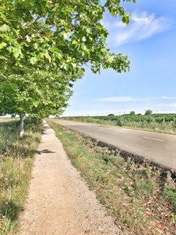 Trees on path walking from El Burgo Ranero to Mansilla de las Mulas with Camino Travel Center on eatlivetravelwrite.com