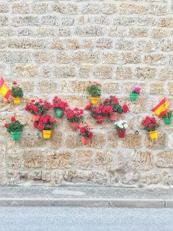 Pretty flowers in Hornillos del Camino Walking from Burgos to Hornillos del Camino with camino Travel Center on eatlivetravelwrite.com