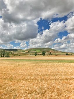 Wheat fields and blue skies walking from Hornillos del Camino to Catrojeriz with Camino Travel Center on eatlivetravelwrite.com