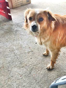 Friendly puppy in Villarmentero de Campos walking from Fromista to Carrion de los Condes with Camino Travel Center on eatlivetravelwrite.com