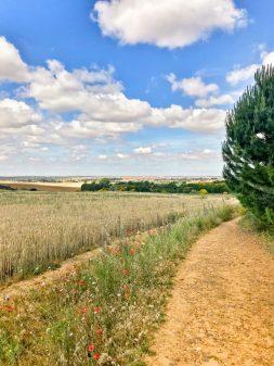 Country roads walking from Calzadilla de la Cueza to Sahagun on eatlivetravelwrite.com