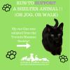 Support Humane Society at Scotia Toronto Waterfront Marathon on eatlivetravelwrite.com