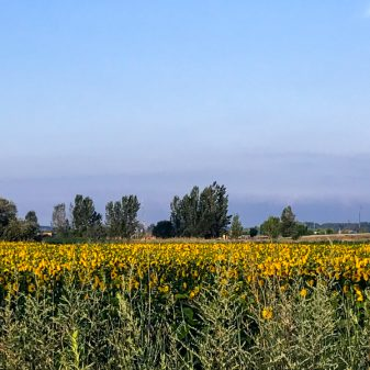 Sunflowers Walking the Camino de Santiago: Villavante to Astorga wit Camino Travel Center on eatlivetravelwrite.com