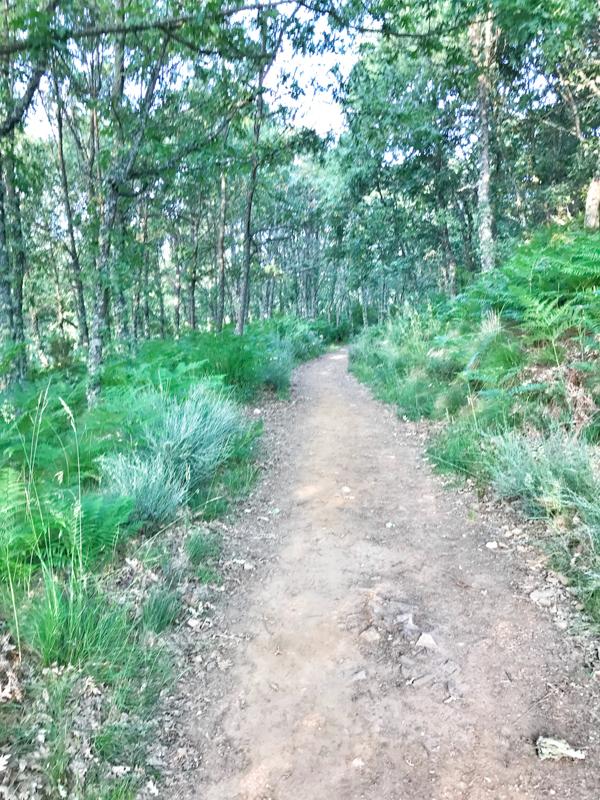 Shady path walking the Camino de Santiago: Rabanal del Camino to El Acebo with Camino Travel Center on eatlivetravelwrite.com