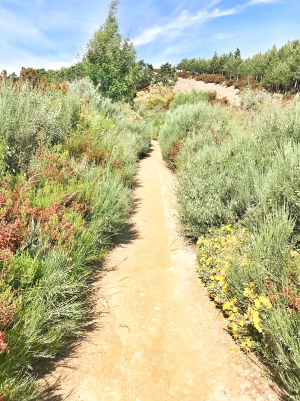 Uphill walking the Camino de Santiago: Rabanal del Camino to El Acebo with Camino Travel Center on eatlivetravelwrite.com