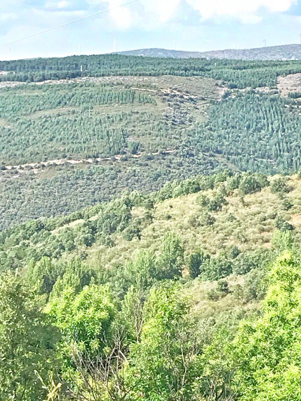 Green vistas walking the Camino de Santiago: Rabanal del Camino to El Acebo with Camino Travel Center on eatlivetravelwrite.com