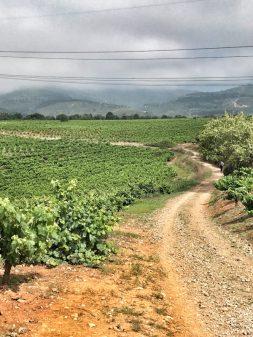 Downhill through the vineyards walking the Camino de Santiago: Ponferrada to Villafranca del Bierzo with Camino Travel Center on eatlivetravelwrite.com