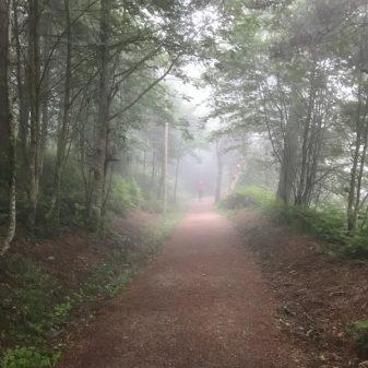 Misty forest walking the Camino de Santiago: O Cebreiro to Triacastela with Camino Travel Center on eatlivetravelwrite.com