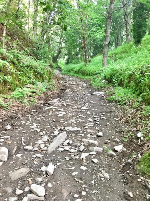 Lush trails walking the Camino de Santiago: Las Herrerías to O Cebreiro with Camino Travel Center on eatlivetravelwrite.com