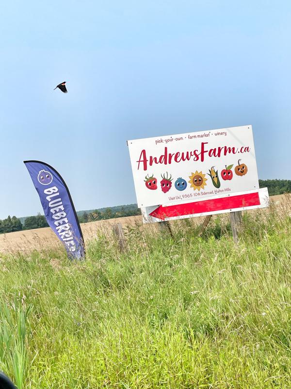 Andrews Scenic Acres Berry Farm Halton Hills, Ontario.
