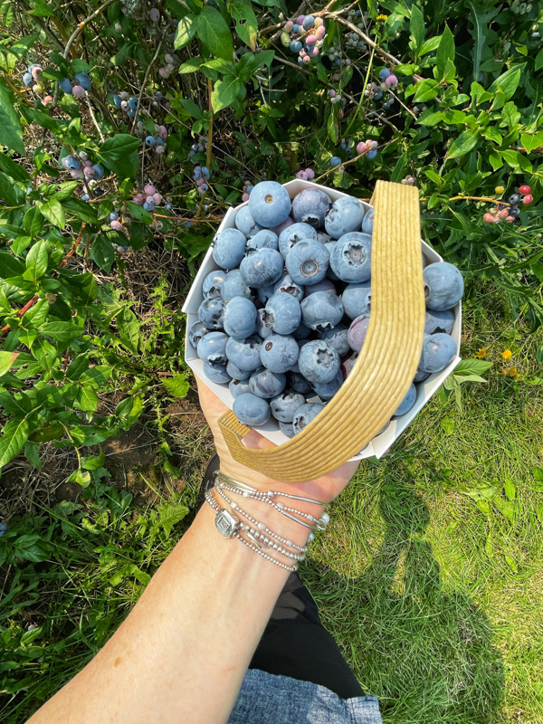 A pint of just picked blueberries.